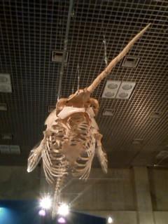 『海の大哺乳類展』